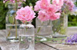 acqua di rose