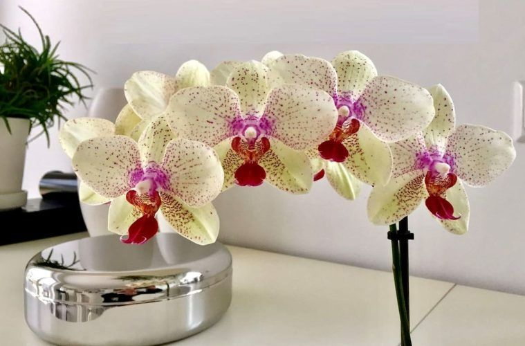 tutti i benefici delle orchidee