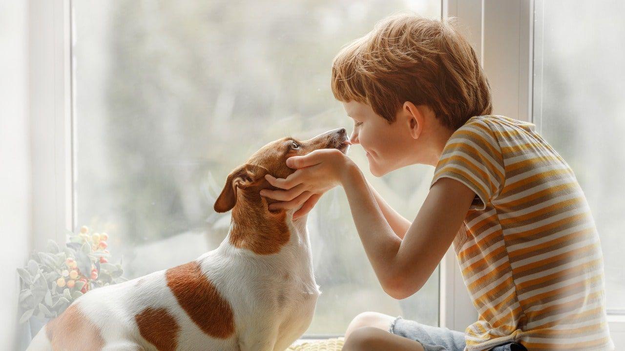 Ci sono molti altri vantaggi di possedere animali domestici in casa.