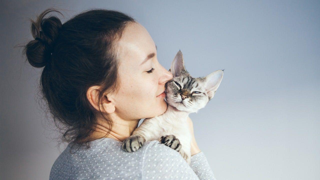 I numerosi benefici che derivano dall'adottare un gatto.