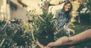curare le piante
